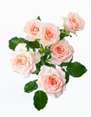 Bunch of rose flowers on white background — Stock Photo