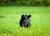 Black dog on grass — Stok fotoğraf