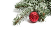 Covered with snow branch of a Christmas tree and brilliant red b — Stock Photo