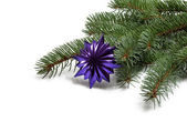 Covered with branch of a Christmas tree and deep purple star and — Stock Photo