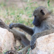 Stock Photo: Relaxing Baboon