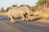 Prancing Rhino — Stock Photo
