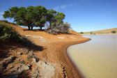 Water equals green in Sossusvlei — Stock Photo