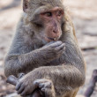 Stock Photo: Concerned sitting monkey