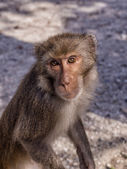 Monkey curious — Stockfoto