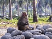Sleeping monkey — Stock Photo
