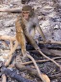 Sad monkey — Stock Photo
