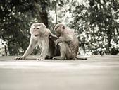 Monkey portrait — Stock Photo
