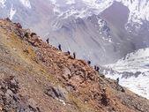 Kletterer in den Bergen — Stockfoto
