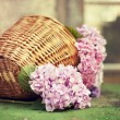 Stock Photo: Wicker basket with pink flowers on a green table