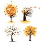 Autumn tree set — Stock Vector