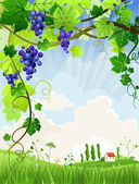 Beautiful landscape with a vineyard — Stock Vector