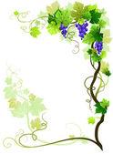 Vineyard frame — Stock Vector