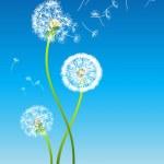 Dandelion — Stock Vector