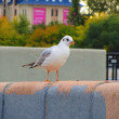 Seagull — Stock Photo #30133153