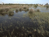 La Algaida nature reserve near Cadiz — Stock Photo