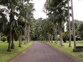 богорский ботанический сад — Стоковое фото