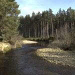 River running into Loch Morlich, Avimore — Stock Photo #31673311