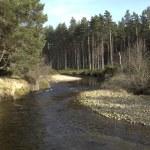 River running into Loch Morlich, Avimore — Stock Photo #31673319