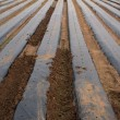 Crops under plastic — Stockfoto