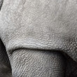 Stock Photo: White rhino, Ceratotherium simum