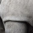 White rhino, Ceratotherium simum — Stock Photo