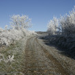 Hoar frost, — Stock Photo