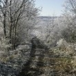 Hoar frost, — Stock Photo #36245405