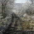 Stock Photo: Hoar frost,