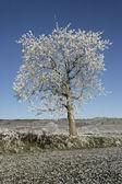 Hoar frost, — Stock Photo
