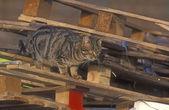 Domestic cat — Stock Photo