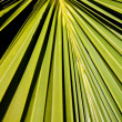 Abstract Palm Frond Leaf Texture — Stock Photo