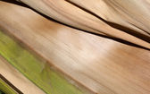 Abstract Palm Frond Wood Texture — Stock Photo