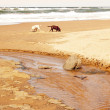Dogs Exploring Beach — Stock Photo