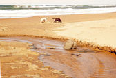 Dogs Exploring Beach — Foto de Stock