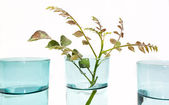 Three Blue Glasses Of Water With Sprig Of Leaves — Stock Photo