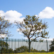 Stock Photo: Scenic View Of Green Palisade Fence in Natural Enviorment