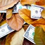 Scattered Dollar Bills Amongst Fallen Autumn Leaves — Stock Photo