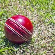 Stock Photo: New Red Cricket Ball On Patchy Grass Lawn