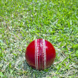 New Bright Red Cricket Ball On Green Grass Field — Stock Photo