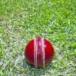New Bright Red Cricket Ball On Green Grass Field — Stock Photo #34825227