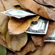 Three Dollar Bills In Pile Of Autumn Leaves — Stock Photo