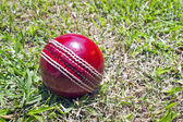 New Red Cricket Ball On Patchy Grass Lawn — Stock Photo