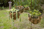 Four Hanging Flower Basket Arrangement in Garden Setting — Stock Photo