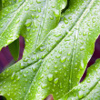 Abstract Closeup Of Green Plant Leaf With Water Droplets — Stockfoto