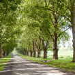 Avenue Of Trees Lining Driveway Leading To Homestead — Stock Photo #38037455