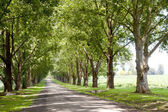 Avenue Of Trees Lining Driveway Leading To Homestead — Stock Photo