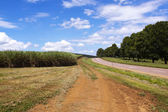 Winding District Road Flanked By Sugar Cane Field — Stock Photo