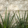 Stock Photo: Green Iris Leaves Against Precast Concrete Wall