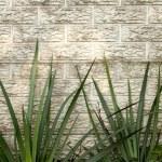 Green Iris Leaves Against Precast Concrete Wall — Stock Photo